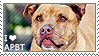 I love American Pit Bull Terriers