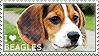 I love Beagles