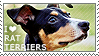 I love Rat Terriers by WishmasterAlchemist