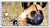 I love African Wild Dogs