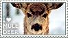 I love Mule Deer