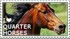 I love Quarter Horses