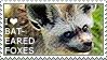 I love Bat-eared Foxes