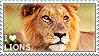 I love Lions by WishmasterAlchemist