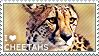 I love Cheetahs