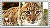 I love Lynx