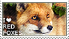 I love Red Foxes
