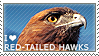 I love Red-tailed Hawks by WishmasterAlchemist
