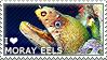 I love Moray Eels by WishmasterAlchemist