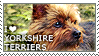 I love Yorkshire Terriers by WishmasterAlchemist