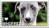 I love Whippets by WishmasterAlchemist