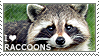 I love Raccoons by WishmasterAlchemist