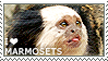 I love Marmosets by WishmasterAlchemist