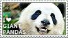I love Giant Pandas by WishmasterAlchemist