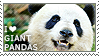 I love Giant Pandas