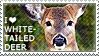 I love White-tailed Deer