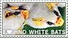 I love Honduran White Bats
