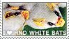 I love Honduran White Bats by WishmasterAlchemist