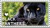 I love Black Panthers by WishmasterAlchemist