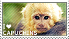 I love Capuchins by WishmasterAlchemist