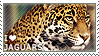 I love Jaguars