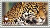 I love Jaguars by WishmasterAlchemist