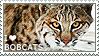 I love Bobcats