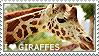 I love Giraffes by WishmasterAlchemist