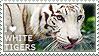 I love White Tigers by WishmasterAlchemist