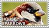 I love House Sparrows