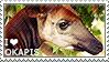 I love Okapis
