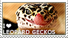 I love Leopard Geckos by WishmasterAlchemist