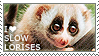 I love Slow Lorises by WishmasterAlchemist