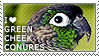 I love Green-cheeked Conures by WishmasterAlchemist