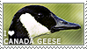 I love Canada Geese by WishmasterAlchemist