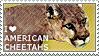 I love American Cheetahs by WishmasterAlchemist