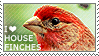 I love House Finches