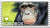 I love Bonobos by WishmasterAlchemist