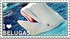 I love Belugas