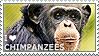 I love Chimpanzees