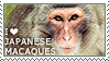 I love Japanese Macaques
