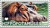 I love Hippopotamuses