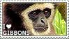 I love Gibbons by WishmasterAlchemist