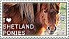 I love Shetland Ponies by WishmasterAlchemist