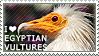 I love Egyptian Vultures