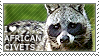 I love African Civets by WishmasterAlchemist