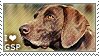 I love German Shorthaired Pointers