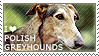 I love Polish Greyhounds