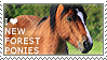 I love New Forest Ponies by WishmasterAlchemist