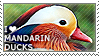 I love Mandarin Ducks